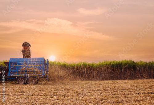 sugar cane harvesting machine working Fotobehang