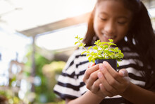 Little Asian Girl Hold Small Tree Pot On Hands, Environment Or Saving Concept
