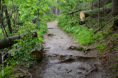 Fototapeta Tatry, szlak Ścieżka nad Reglami, latem we mgle obraz