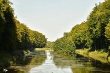 L'arbre Isolé En Boule Avec Feuillage Jusque Dans L'eau Dans L'un Des étang étroits Du Parc De Tervuren ) L'est De Bruxelles