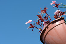 Closeup Of Hanging Vase With Pink Impatiens And Totally Blue Sky