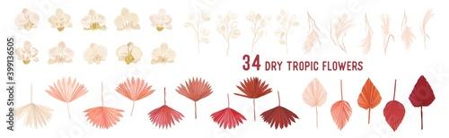 Fototapeta Dried pampas grass, lunaria flowers, orchid, tropical palm leaves vector bouquets