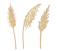 Hand-drawn Vector Drawing In Pastel Beige Colors. Set Of Twigs, Inflorescences Of Panicles Of Pampas Grass Isolated On White Background. Reed, A Wild Steppe Plant. For Decoration In Boho Style.