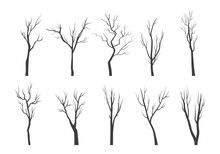 Tree Branch Silhouette Set. Bare Twisting Stems Of Plants With Various Tracery Forms Of Growth Winter With No Forest Leaves Dry Plucked Shoots With Dead Bark. Abstract Vector Outline.