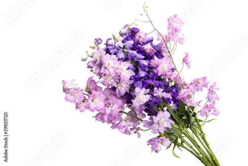 Valokuvatapetti delphinium flower isolated