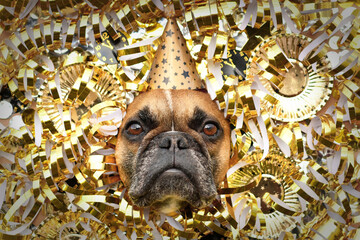 Silvester party dog. French Bulldog with party hat sticking out head between shiny golden blowouts, plates and paper clocks