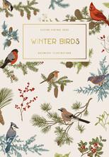 Vintage Vector Card. Winter Birds. Botanical Illustrations. Tit, Robin, Jay, Blue Jay, Bullfinch, Bluebird, Red Cardinal