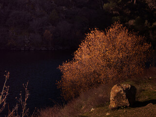 krajobraz rzeka drzewa jesień niebo woda