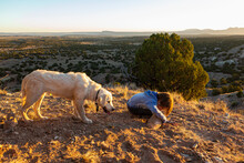 Young Boy Outdoors At Sunset With His English Cream Golden Retreiver Dog