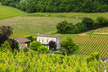 House And Vineyard In The Bordeaux Region Near St. Emilion