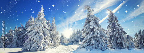 Photo zauberhafte Winterlandschaft im Wald
