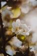 Frühling Blüten