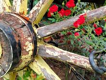 Wagon Wheel And Roses