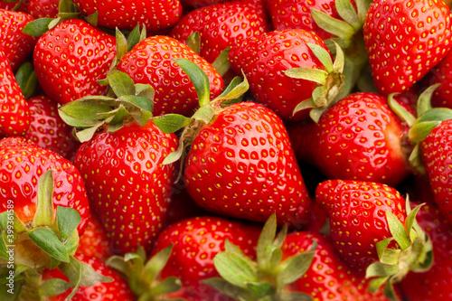 Fototapeta strawberry group macro closeup focus detail