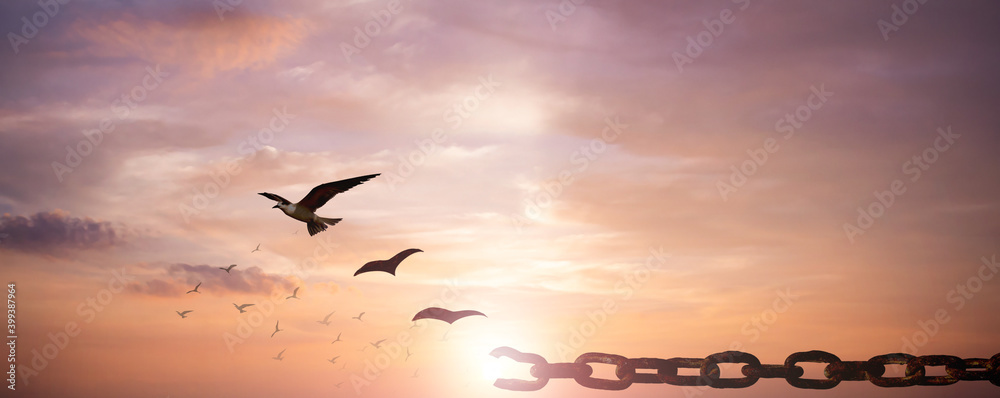 Fototapeta Freedom concept: Silhouette of bird flying and broken chains at sky sunset background