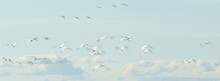 Abstract Photo Of Flying Birds In The Sky, Long Exposure Picture