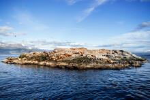 Sea Lions Resting On The Coast.