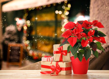 Christmas Traditional Poinsettia Flower And Gift Boxes On Wooden Table On Blurred Background, Space For Text