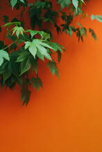 Maple Branch With Green Leaves On A Orange Wall Background