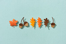 Colorful Paper Cut Of An Oak And A Maple Leaf, Acorn.