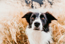 Close-up Of Border Collie Dog Among Leaves