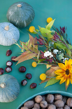 Autumn Flora Including Nuts, Pumpkins And Flowers