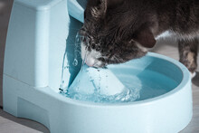 Funny Cat Drinks Water From Water Dispenser. Cat Water Fountain. Pet Thirst. Dehydration In A Cat.