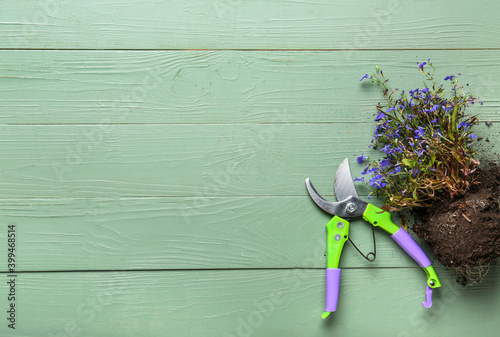 Photo Pruner for gardening with plant on wooden background