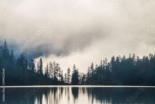 Fotografía Silhouettes of pointy tree tops on hillside along mountain lake in dense fog