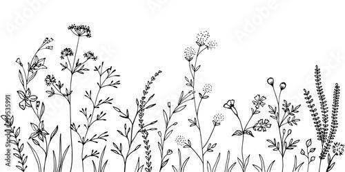 Fototapeta Black silhouettes of grass, flowers and herbs. obraz