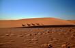 Fußspuren im Sand der Wüste und im Schatten einer Kamelkarawane