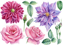 Rose Flowers, Clematis, Dahlias, Buds And Leaves Watercolor Botanical Painting