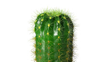 Cactus, Small Summer Plant, Spiky Green, Thorny, Close-up View Isolated On A White Background