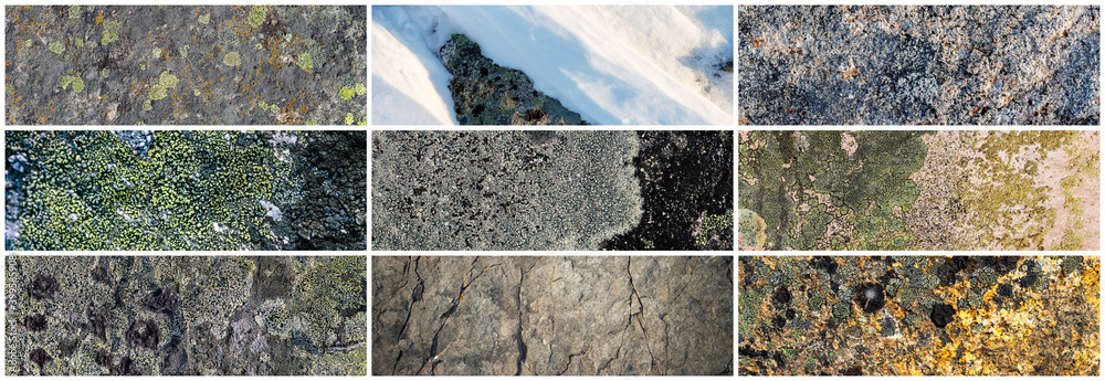 Fotografia Set of texture of stones covered with lichen