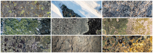 Set of texture of stones covered with lichen Fototapeta