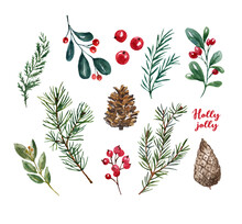 Watercolor Winter Greenery Graphic Set. Hand Painted Pine Tree Branches, Red Berries, Pine Cones, Isolated On White Background. Christmas Illustration. Evergreen Plants.
