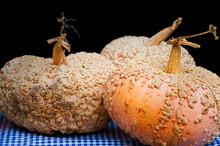 Closeup Of Light Orange Gnarly Pumpkins