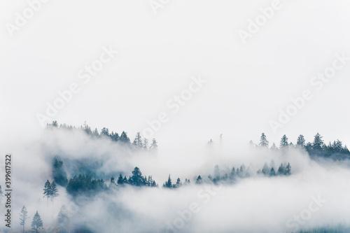 Fototapeta Copyspace Forrest hillside and low clouds. obraz