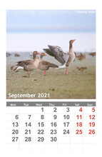 Calendar 2021 With Birds.