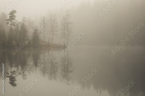Obraz Misty morning by the forest lake. Trees and surroundings are reflected on the water surface. - fototapety do salonu