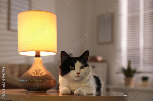 Canvas-taulu Cute cat lying on table near lamp at home