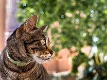 Portrait Of A Pet Cat In An Urban Environment
