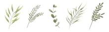 Abstract, Art, Background, Beautiful, Botanic, Botanical, Botany, Branch, Collection, Decor, Decoration, Decorative, Design, Drawing, Drawn, Eco, Elegant, Element, Flora, Floral, Flower, Foliage, Fore