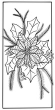 Coloring Book Vector New Year Flower Poinsettia Euphorbia Pulcherrima Christmas Holiday Illustration Outline Stroke Isolate On White Background Holiday Hand Drawing