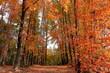 針木浄水場 オレンジ色に色づく 紅葉 (高知県 高知市)
