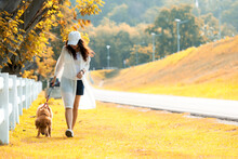 Asian Lifestyle Woman Walking So Happy With Golden Retriever Friendship Dog Near The Road In Sunrise Outdoor The Summer Park...