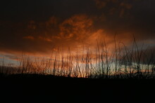 Late Autumn Sunset Above A Hedgerow