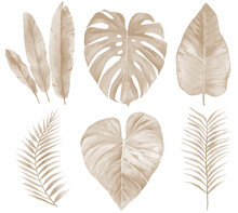Dry Banana And Tropical Leaves. Beige Palm Leaf Set. Watercolour Illustration Isolated On White Background.