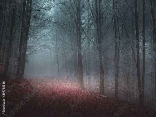 Fototapeta Mysterious foggy forest covered with rime in late autumn