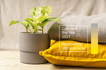 Plant, pillow and plaid on trendy yellow and gray colors . Illuminating Yellow and Ultimate Gray, new colors of the year 2021.